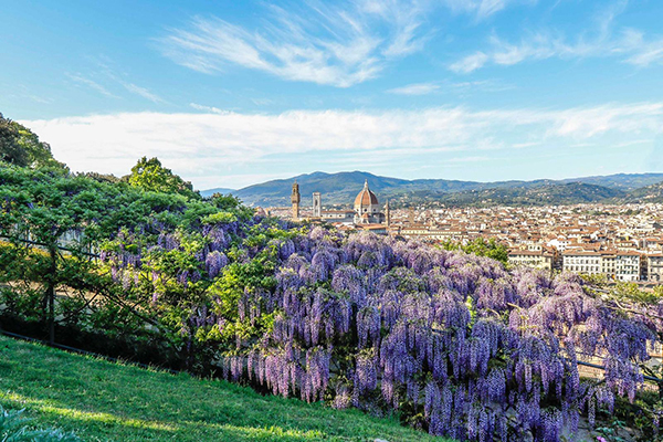 The most beautiful blooms in Florence