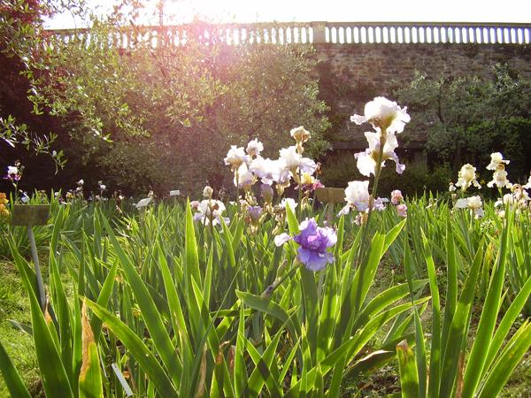 Il giardino dell iris a firenze firenze made in tuscany - Il giardino dell artemisia ...